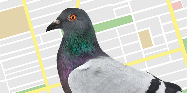 Cómo adaptar tu página web a PIGEON, el nuevo algoritmo de Google